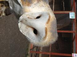 The Owl and Falconry Centre