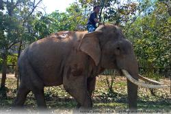 Sappraiwan Elephants Sanctuary