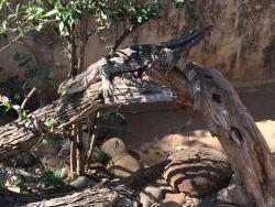 ‪Kinyonga Reptile Center‬
