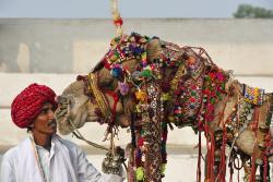 Rajasthan Tour Planner
