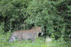 Bandipur National Park and Tiger Reserve