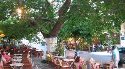 Platanos Cafe