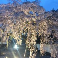 Daigo-ji Temple Sanbo-in Palace Garden