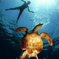 Mr.Diver Red Sea Diving Center