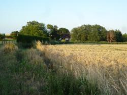Reynolds Farm - from a distance