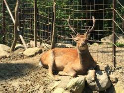 Iida City Zoo