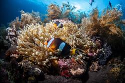 Bali 2 Dive Diving Center