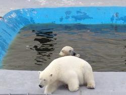 Yakutsk Zoo Orto Doidu