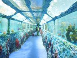 Tunnel Oceanarium