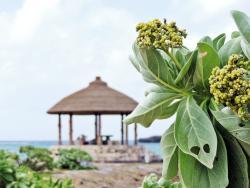 Onna Seaside Cizil Park Nabii Beach