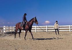 Creer Miura Horse Riding Club