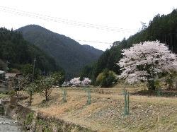 Yoshino Miyataki Manyo Road