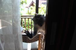 Обезьяна проверяет закрыт ли балкон...