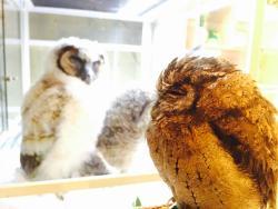 Bird Cafe, Asakusa
