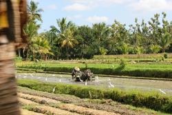 Bali By Quad