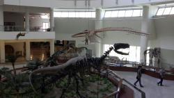 Tabiat Tarihi Muzesi