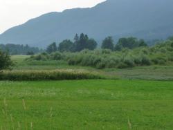 Recurrent Lake of Ledine