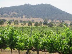 Western Wine Tours
