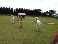 ‪Silver Fox Farm Alpacas‬