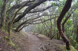 Sendero El Bosque Encantado
