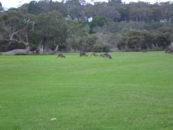 Kalgan River Golf Course