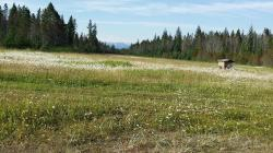 wild flowers and berry meadow with mountains in the background. this is where we saw bears and m
