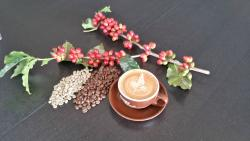 Simply Beans Coffee Roasters