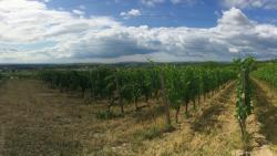 Weinweg Langenlois