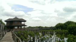 Alam Angke Kapuk Nature Park