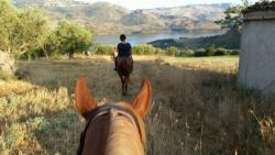 Amico Cavallo