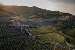 Azienda Agricola Colle Bereto
