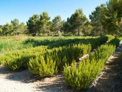 Ecoherbes Park