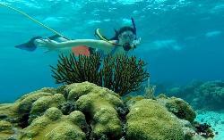 Varadiving Club - Hookah Snorkeling Varadero