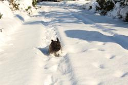 Dog on the run!