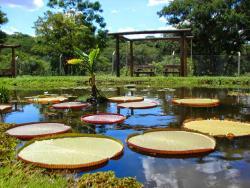 Municipal Botanical Garden of Bauru