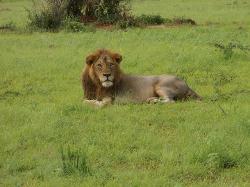 Gorilla Tour Booking Safaris - Day Tours
