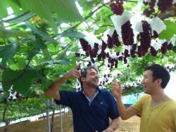Ishihara Farm