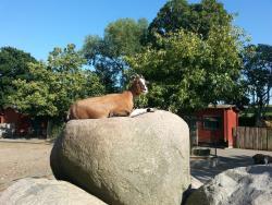 Derr Zoo-Park Arche Noah in Gromitz/Ostsee