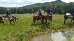 Winter Hawk Trail Rides