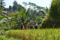 Panji Bali Driver Reliable - Day Tours