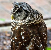Audubon Center for Birds of Prey