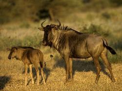 South East Africa Safaris - Vilanculos Coastal & Wildlife Reserve Day Tours