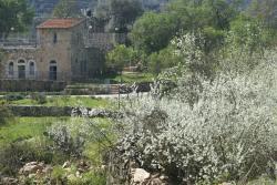 Yellin House at Motza