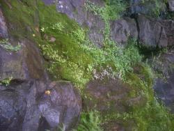 Castle Rock Trails
