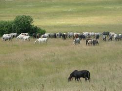 State Stud Farms Djakovo