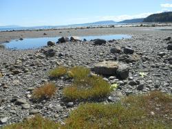 Sandy Island Marine Provincial Park