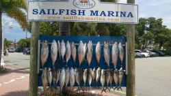 ‪Sailfish Marina Resort‬