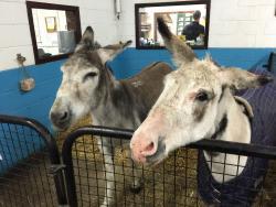 The Donkey Sanctuary Birmingham