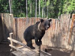 Зоокомплекс Три Медведя