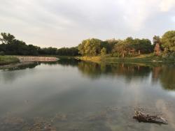 Cottonmill Lake